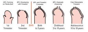 рост головки с возрастом
